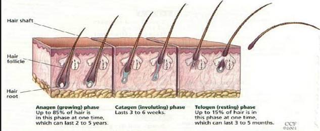 triamcinolone la gi